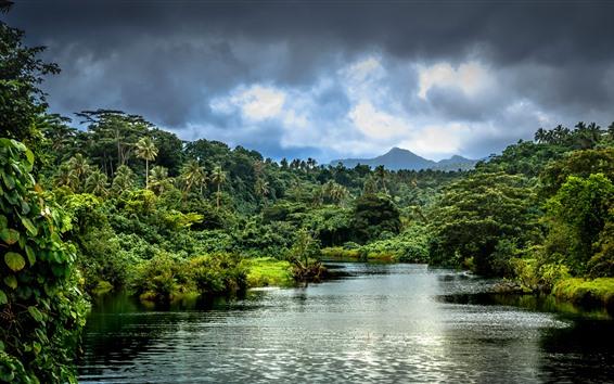 배경 화면 강, 야자수, 정글, 덤불, 산, 열대, 사모아