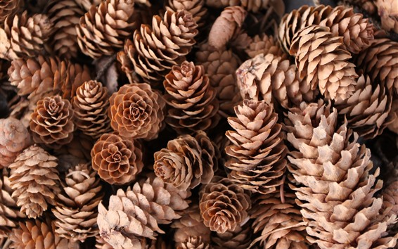 Wallpaper Some pine cones