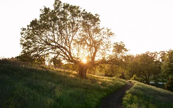 Fond d'écran Arbre, herbe, chemin, rayons de soleil, éblouissement