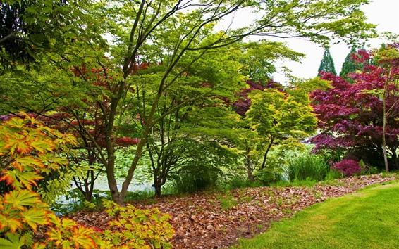 배경 화면 나무, 잔디, 연못, 잎, 봄