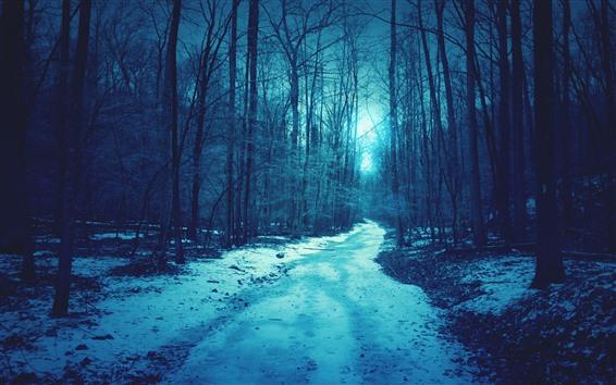 Wallpaper Trees, snow, path, darkness, dusk