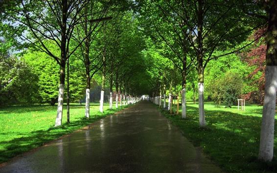 壁紙 木、濡れた道、グリーン、サンシャイン、庭