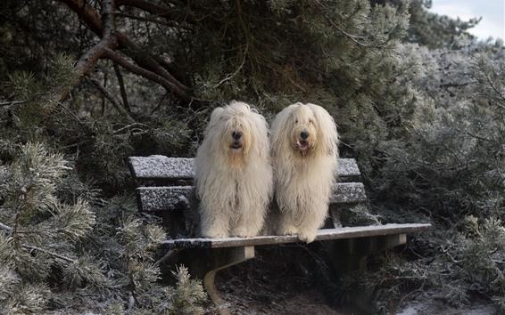 배경 화면 두 개의 흰색 개, 벤치, 눈, 겨울