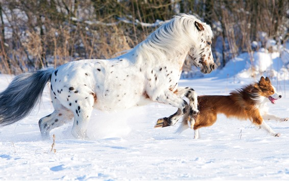 Wallpaper White horse and dog, running, snow, winter