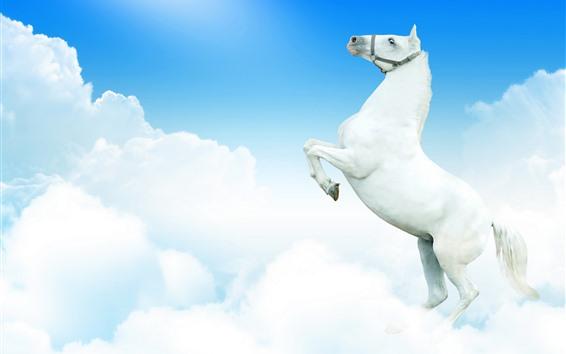 Fond d'écran Cheval blanc, ciel, nuages