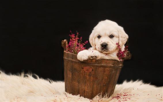 Hintergrundbilder Weißer Welpe, Eimer, Blumen