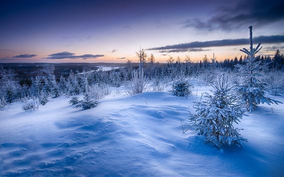 壁紙 冬、雪、木、草、川、雲、夕暮れ