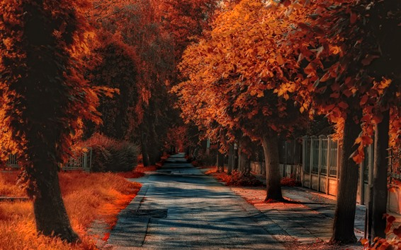 Wallpaper Autumn, trees, road, red leaves, grass