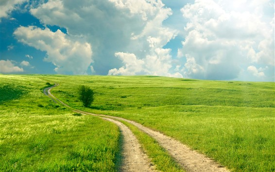 壁紙 美しい緑のフィールド、パス、白い雲、日差し、夏