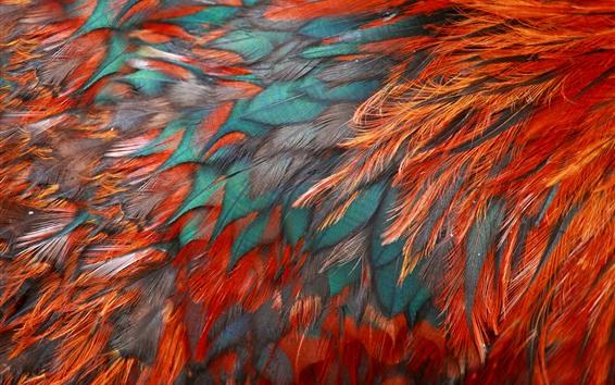 Papéis de Parede Penas de pássaro, vermelho e azul, textura