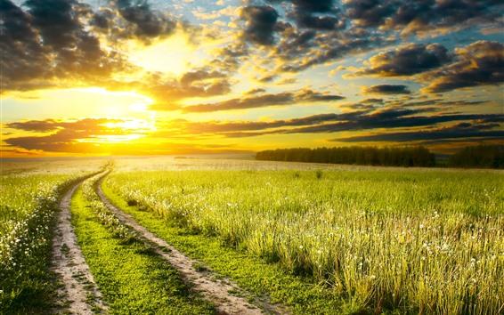 Papéis de Parede Campos, flores, estrada, pôr do sol, céu, nuvens