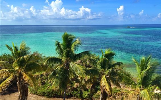 Papéis de Parede Flórida, palmeiras, costa, mar azul, céu, nuvens, EUA