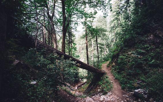 Fond d'écran Forêt, sentier, arbres, roches