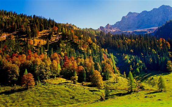 Обои Лес, Деревья, Тень, Горы, Осень, Природа