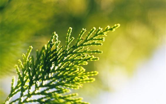 壁紙 緑の植物、枝、グレア