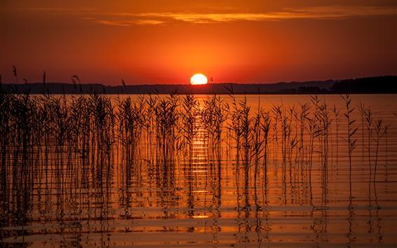 Fond d'écran Lac, herbe, roseau, coucher de soleil, ciel rouge, silhouette