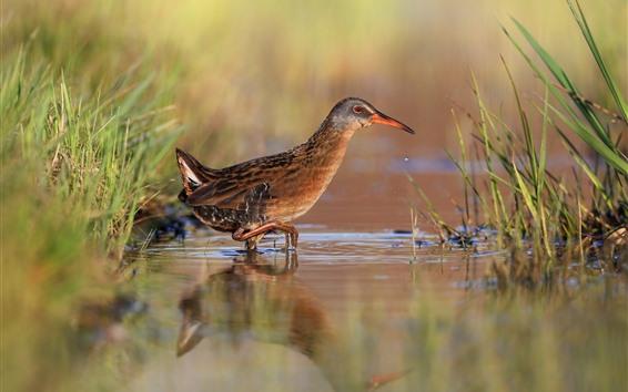 Обои Одна птица, вода, макросъемка