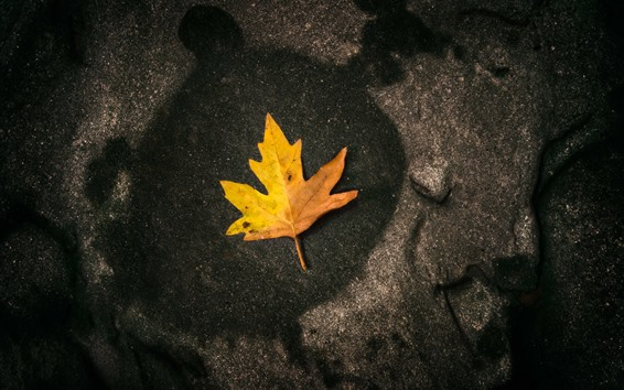 Обои Один желтый клен лист, камень