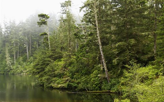 Fond d'écran Oregon, arbres, forêt, brouillard, lac, USA