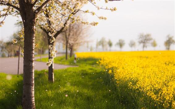 Wallpaper Spring, flowers, yellow rapeseed flowers