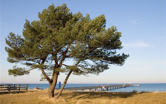 Wallpaper Tree, pier, bridge, sea, grass