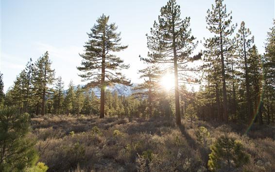 Wallpaper Trees, forest, grass, sunshine, summer