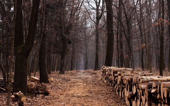 Wallpaper Trees, wood, forest, autumn