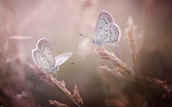 Обои Две бабочки, трава, насекомое, туманные