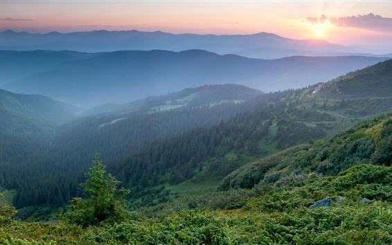 Wallpaper Ukraine, Carpathians, morning, mountains, fog, forest, sunrise