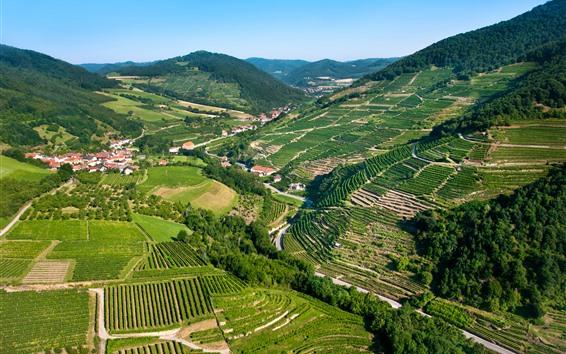 Wallpaper Austria, field, plantation, mountains, houses