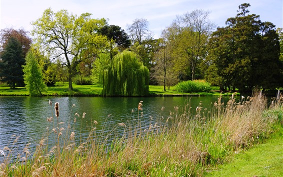 Fondos de pantalla Inglaterra, Peterborough, Parque, Sauce, Árboles, Lago, Hierba