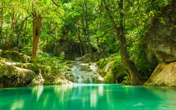 Wallpaper Forest, stream, stones, trees, jungle, lake