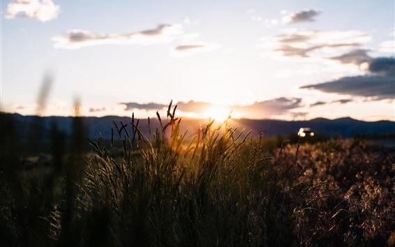 Fondos de pantalla Hierba, silueta, puesta de sol, cielo, nubes, atardecer