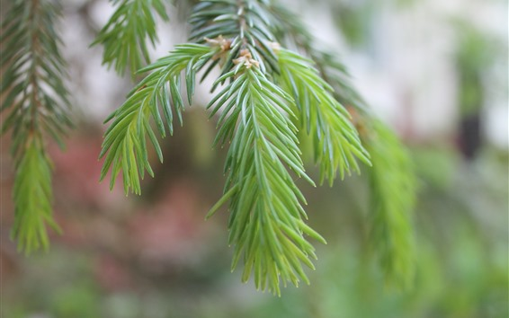 Wallpaper Green plants, fir twigs, needles