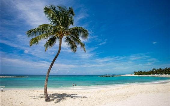 Wallpaper Lonely palm tree, beach, sea, tropical, blue sky