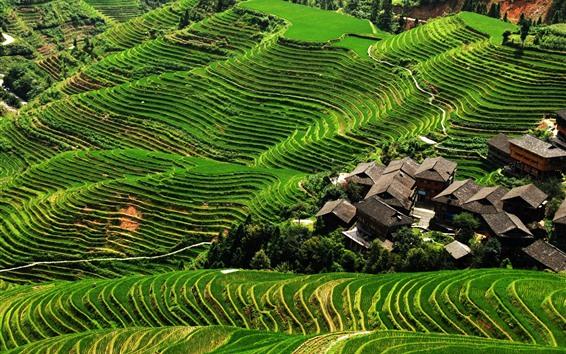 Wallpaper Longji Terraces, green, slope, village, China