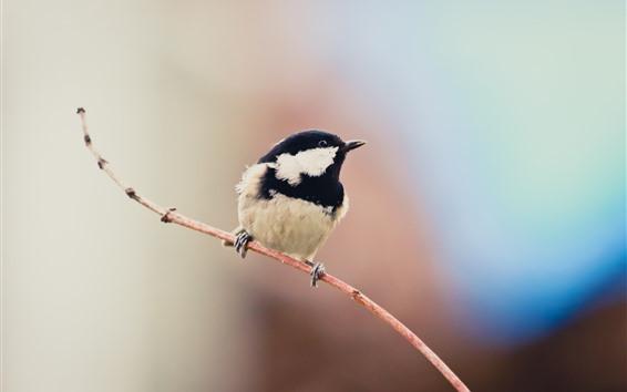 Fondos de pantalla Un ave, plumas en blanco y negro, ramitas.