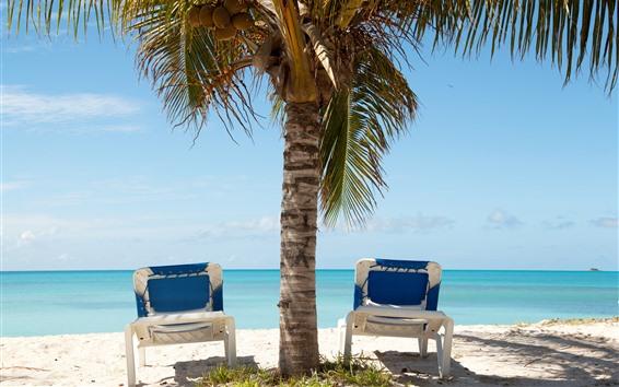 Wallpaper Palm trees, chaise, sea, sunshine, shadow