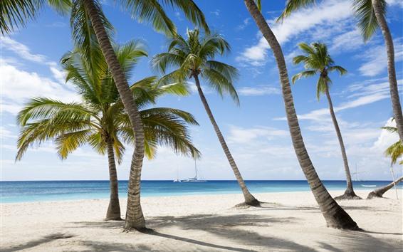 Обои Пальмы, тень, пляж, море, тропические
