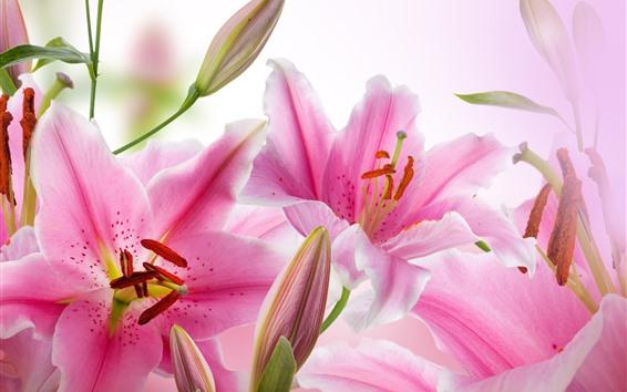 Wallpaper Pink lilies, flowers, petals, pistil