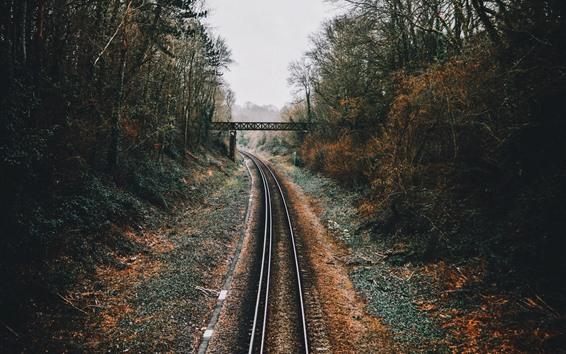 Wallpaper Railroad, bridge, trees, fog