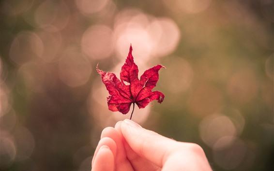 Обои Красный кленовый лист, рука, туманные