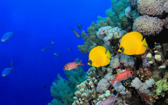 Wallpaper Some fish, sea, corals, underwater