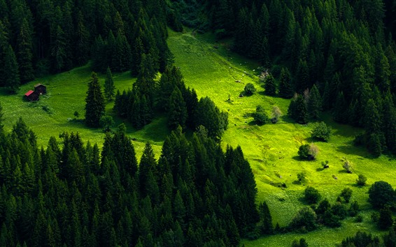 Обои Швейцария, гора, склон, дома, деревья, зеленый