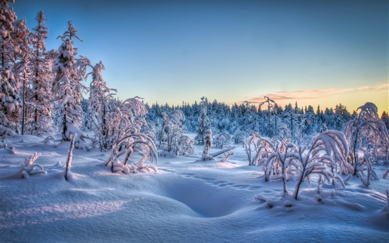Wallpaper Thick snow, trees, forest, winter, dusk