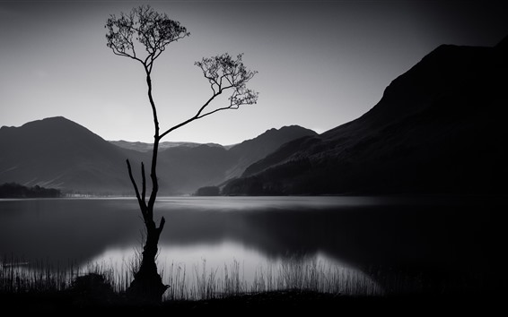Wallpaper Tree, mountains, lake, black and white picture