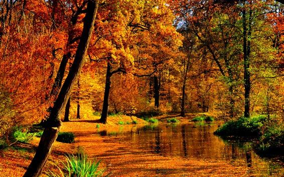 Обои Осень, деревья, пруд, красные листья, солнце