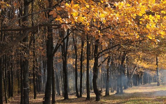 Обои Осень, желтые листья, деревья, туманные