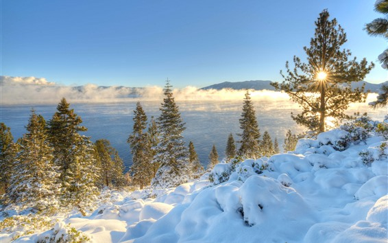 Wallpaper California, Nevada, trees, river, sunrise, morning, winter, USA