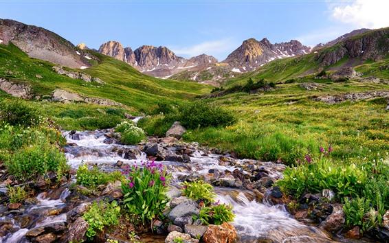 Hintergrundbilder Colorado, Blumen, Berge, Steine, Bach, USA